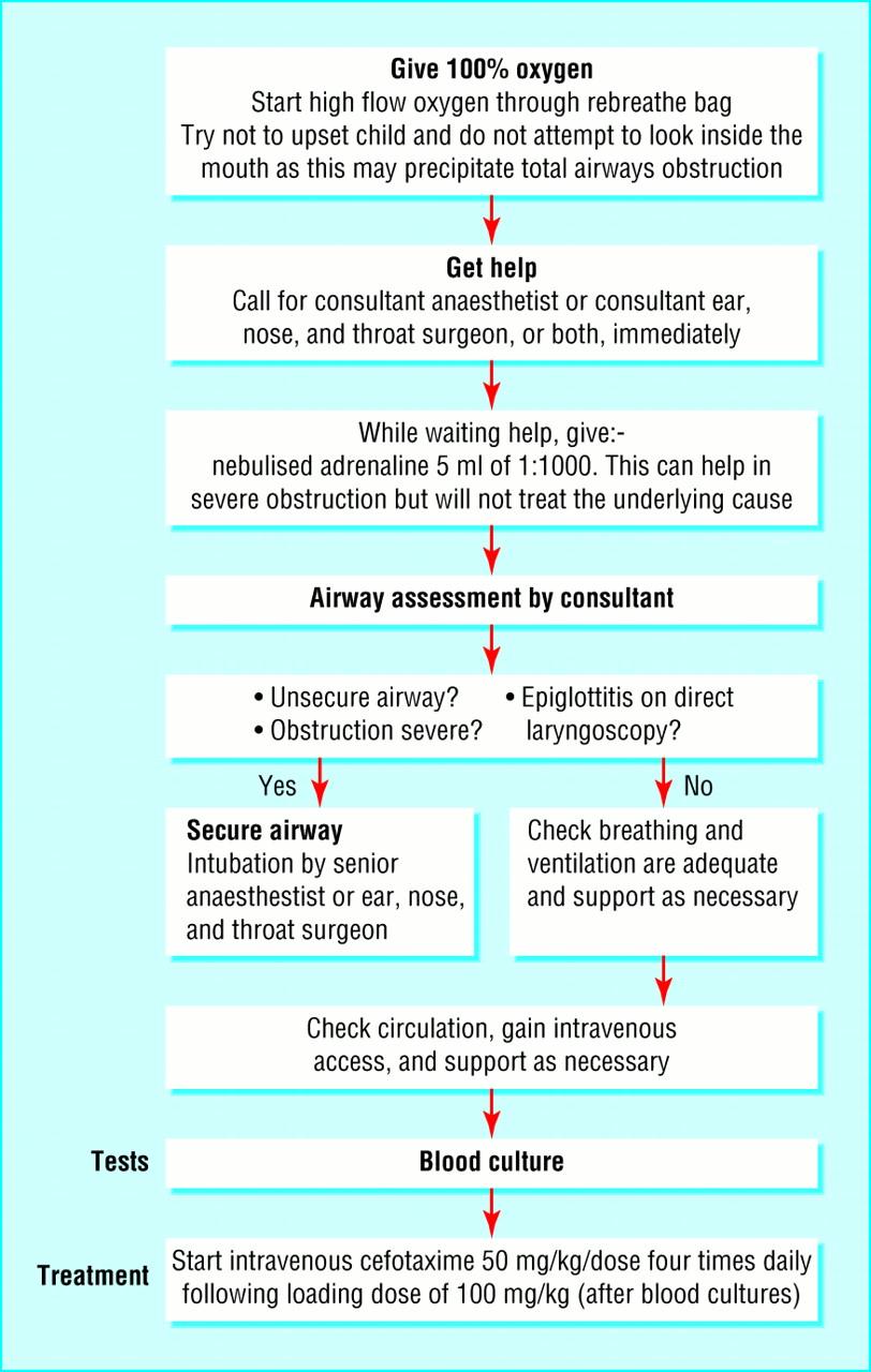 Adult Epiglottitis: A Case Presentation and Literature ...