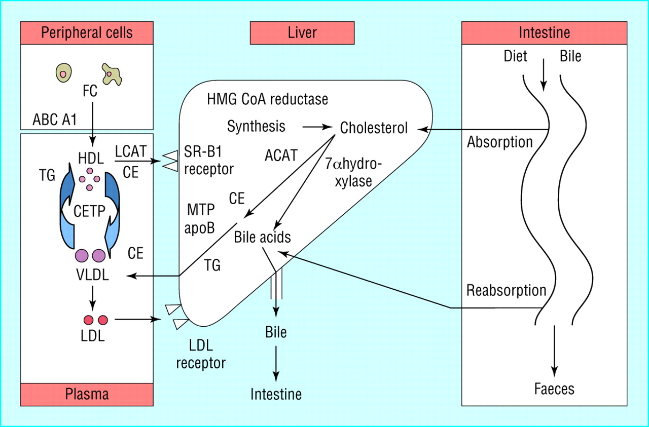 Is good cholesterol always good? | The BMJ