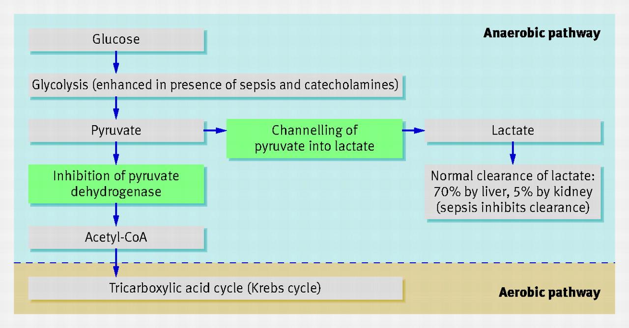 Metformin and lactic acidosis can you buy generic viagra cvs cost