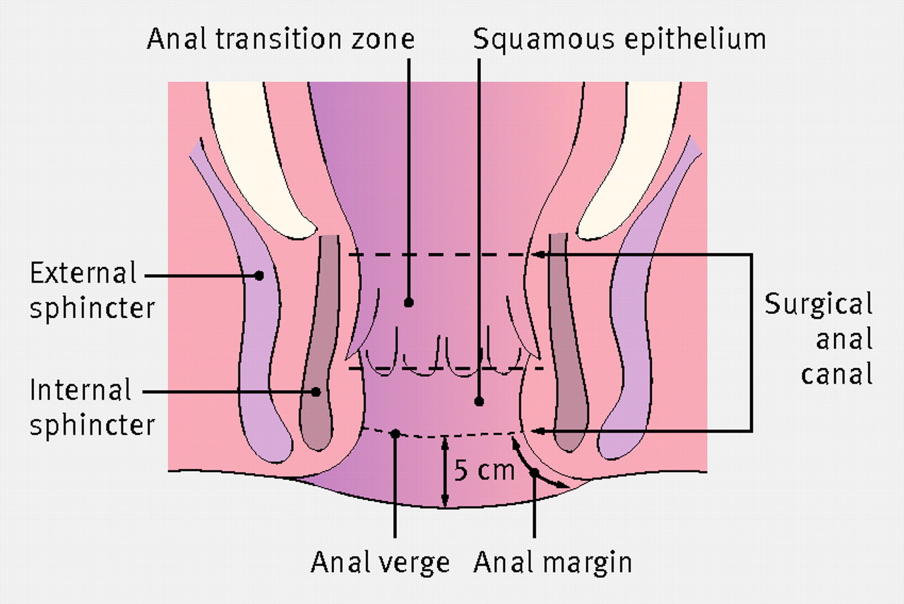 Anal definition
