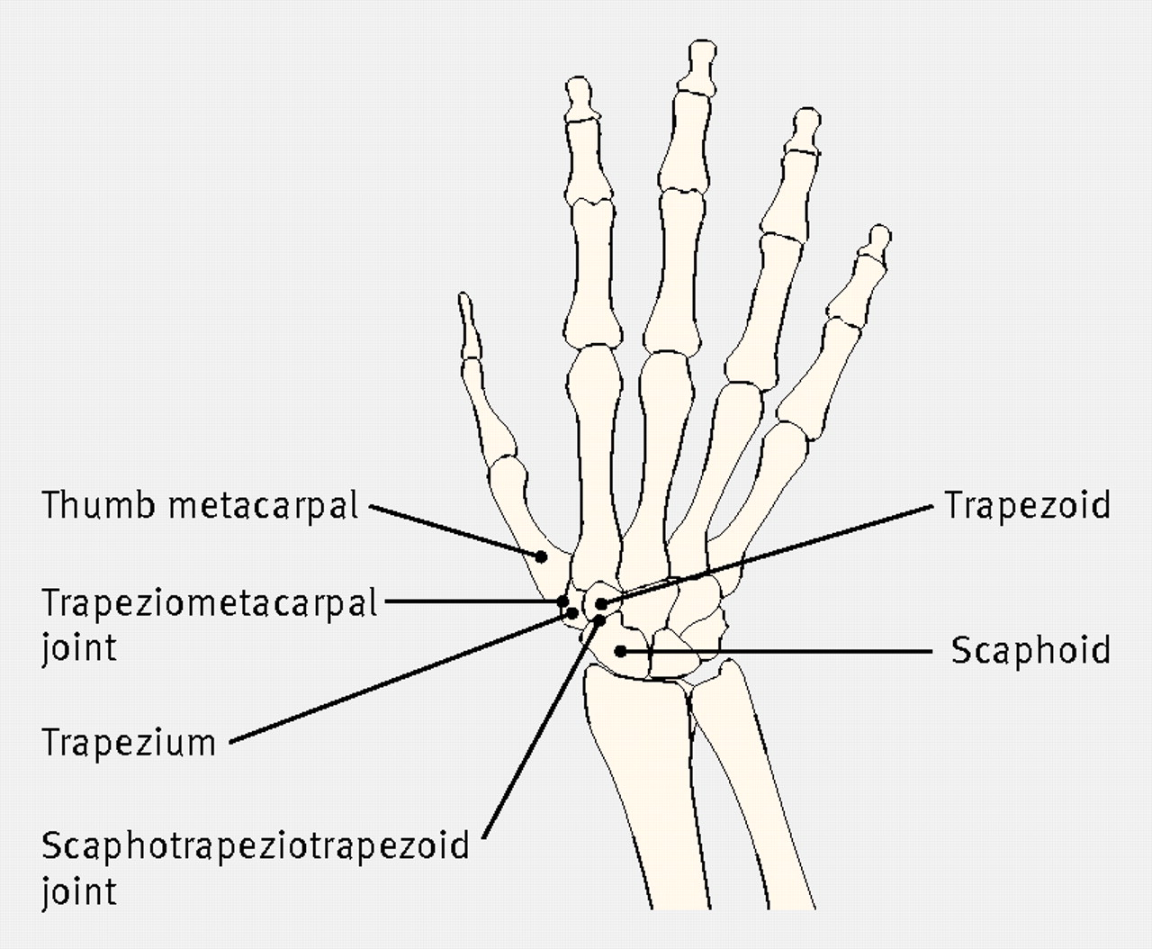 Base Of Thumb Diagram - Auto Electrical Wiring Diagram •