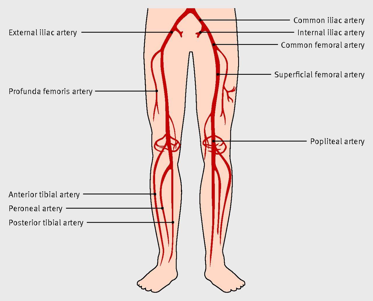 Peripheral Arterial Diagram House Wiring Diagram Symbols