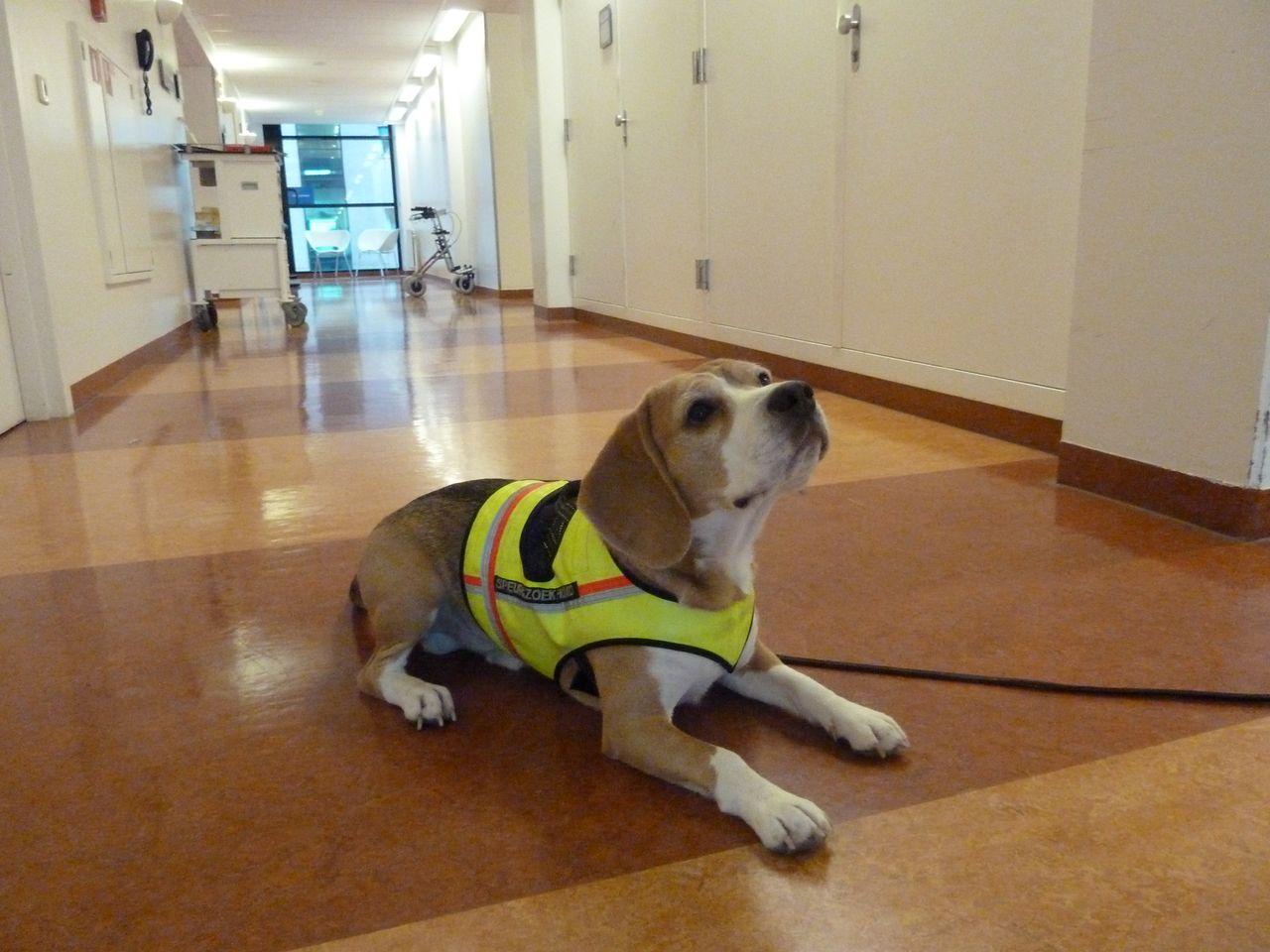 Using A Dog S Superior Olfactory Sensitivity To Identify
