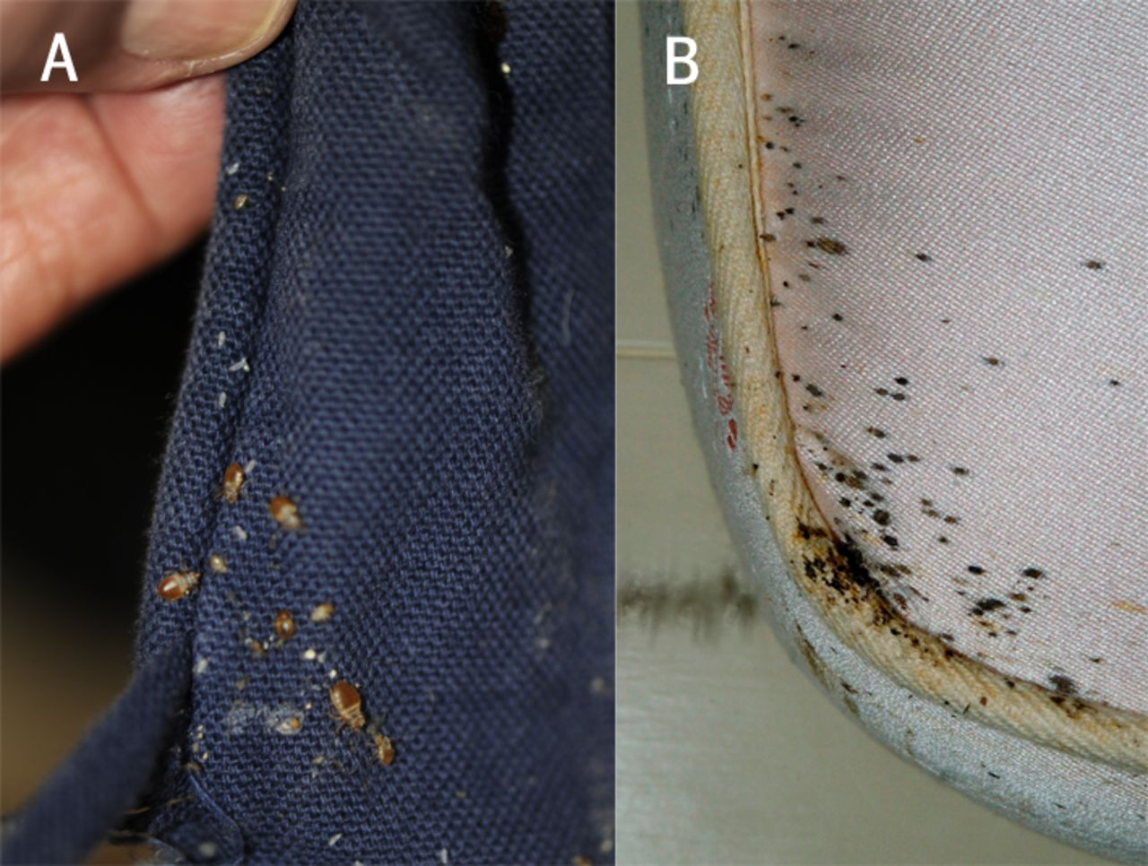Bed Bug Removal From Suitcases