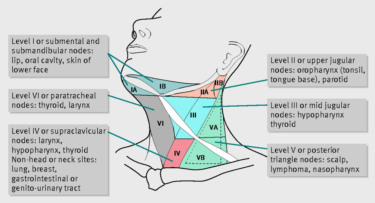 Diagram Of Lymph Nodes Drainage Neck - Information Of Wiring Diagram •
