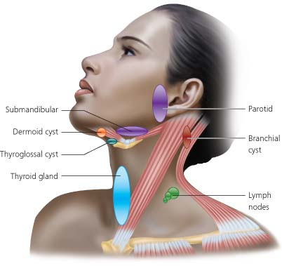 Neck Swellings | The BMJ