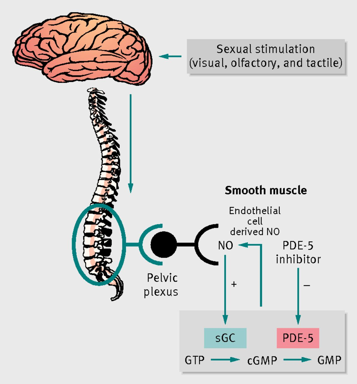 Organic sexual dysfunction