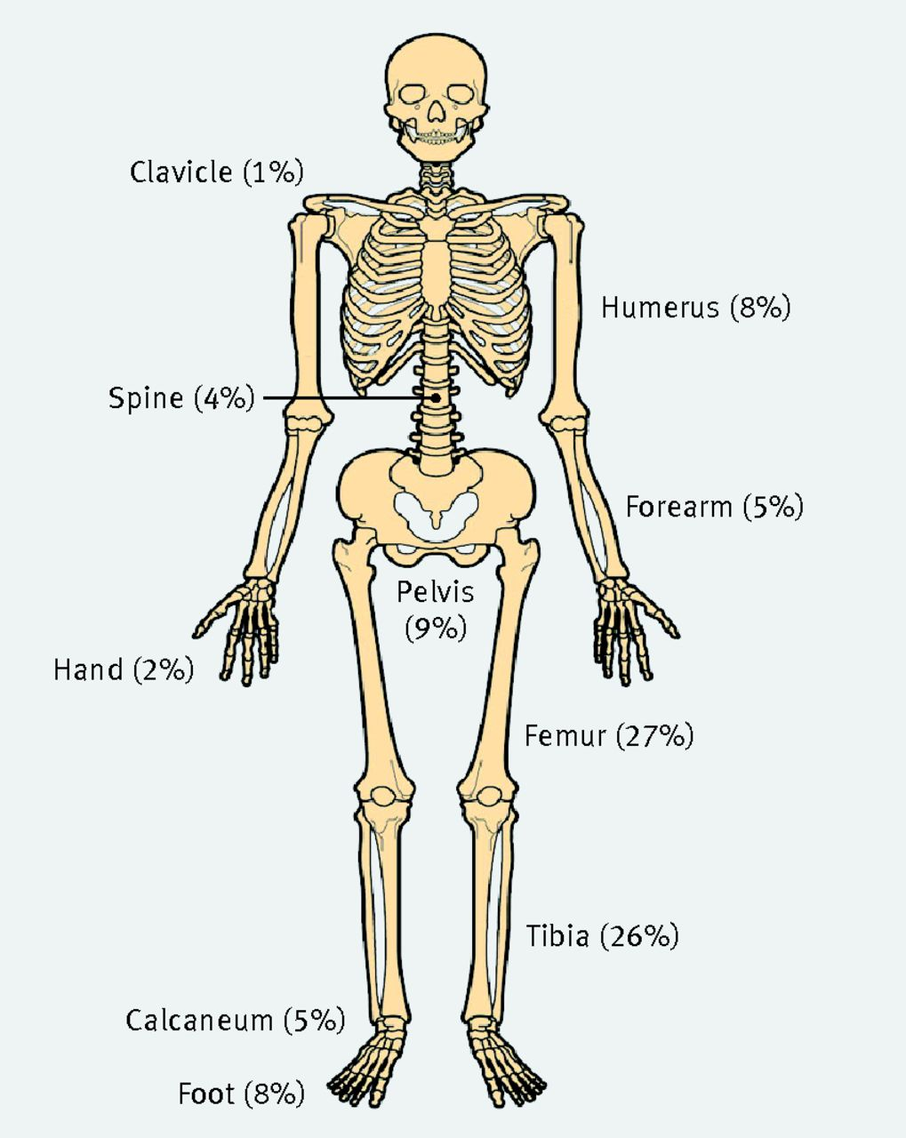 Pictures of the bones in body Hand and Wrist - Anatomy Pictures and Information