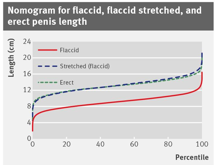 penis erect Flaccid and