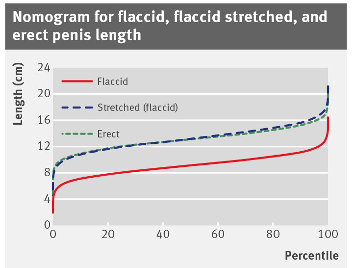 Length of erect circumcised penis