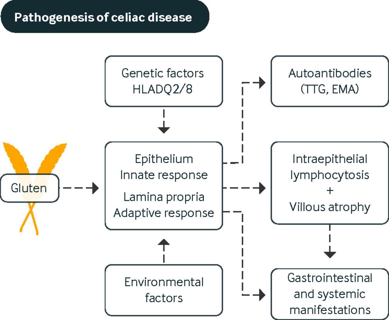 celiac disease and non-celiac gluten sensitivity | the bmj