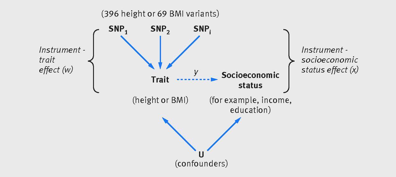 Height Body Mass Index And Socioeconomic Status Mendelian