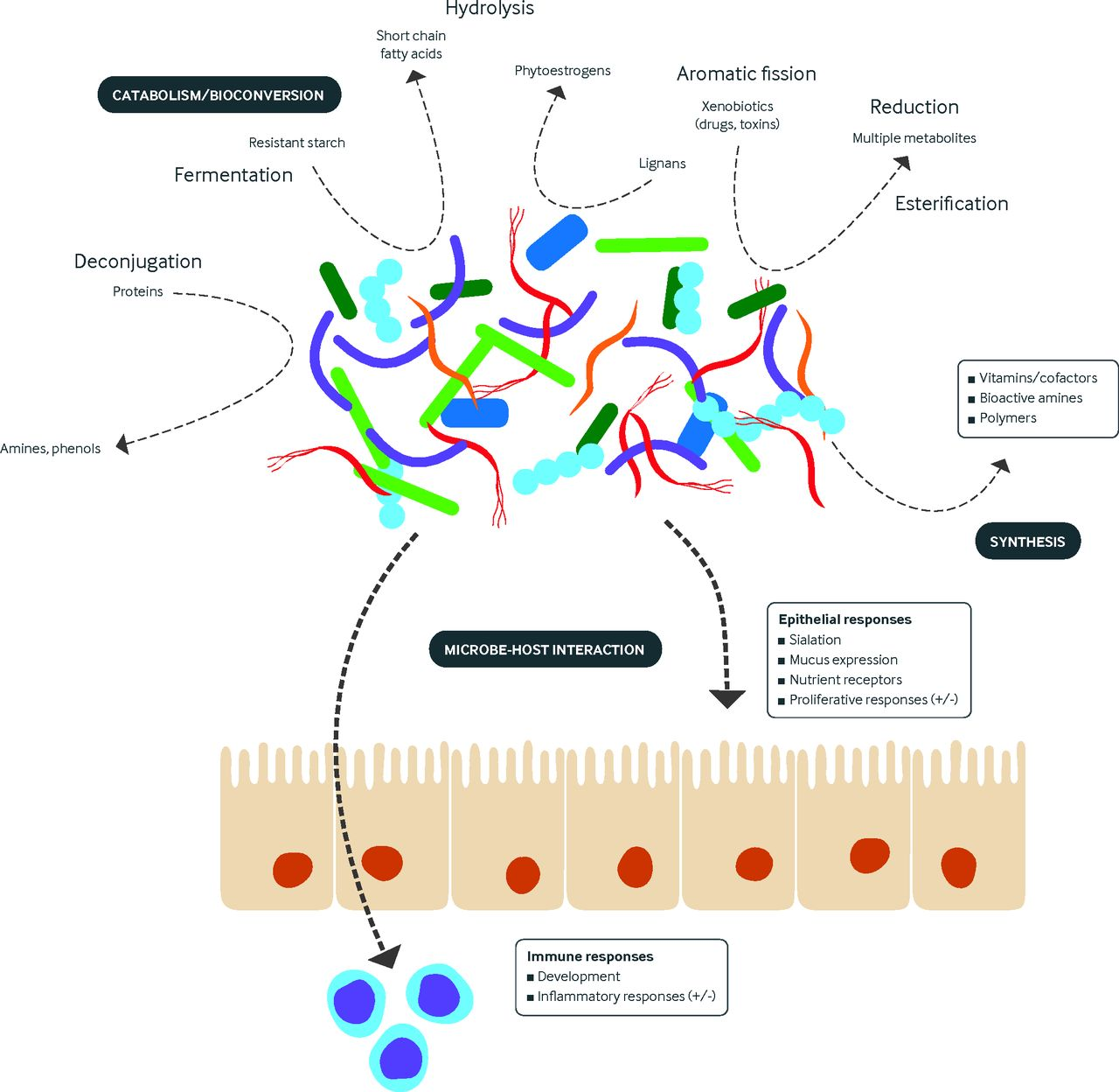 The role of the microbiome in human health and disease: an