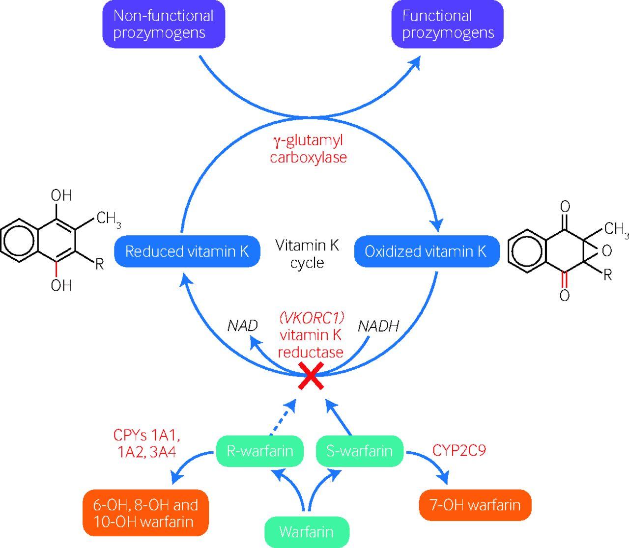 urgent reversal of vitamin k antagonists the bmj