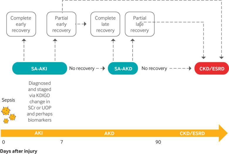 Sepsis associated acute kidney injury | The BMJ