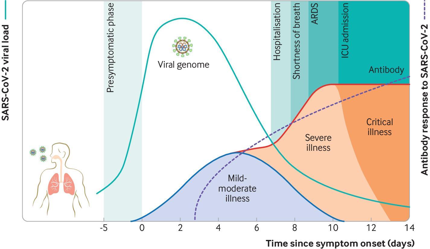 Virology Transmission And Pathogenesis Of Sars Cov 2 The Bmj