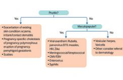 Diagnostic flow chart for rash in pregnancy