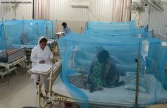 Patients with dengue fever in an isolation ward